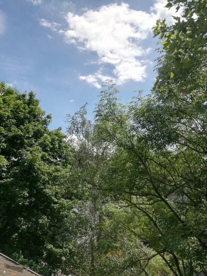 Drzewa przed niebieskim niebem fotografia stock