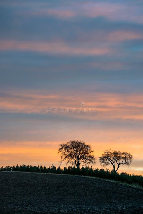 Drzewa przy colourfull niebem zdjęcie stock
