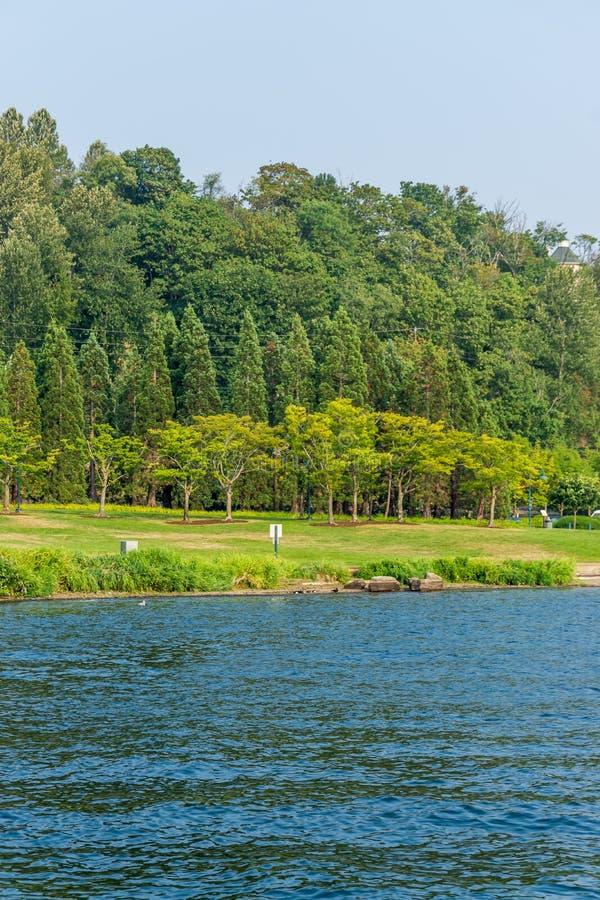 Drzewa Przy Coulon parkiem zdjęcia royalty free