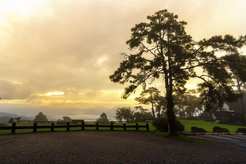 Drzewa przy parking z niskimi drewnianymi ogrodzeniami są barierą obrazy royalty free