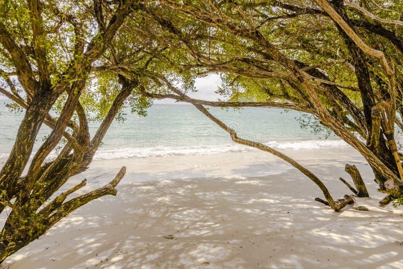 Drzewa przy tropikalną plażą obraz royalty free