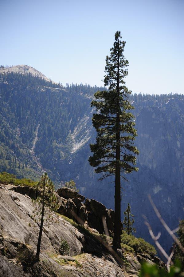 Drzewa przy wierzchołkiem Yosemite spadki obrazy stock