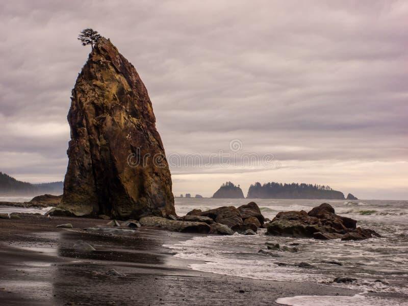 Drzewa r na dennych stertach przy piaskowatą plażą obraz royalty free