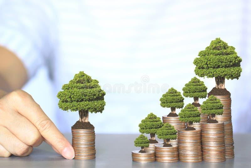 Drzewa r na moneta pieniądze, inwestycji i biznesu pojęciu, obraz royalty free