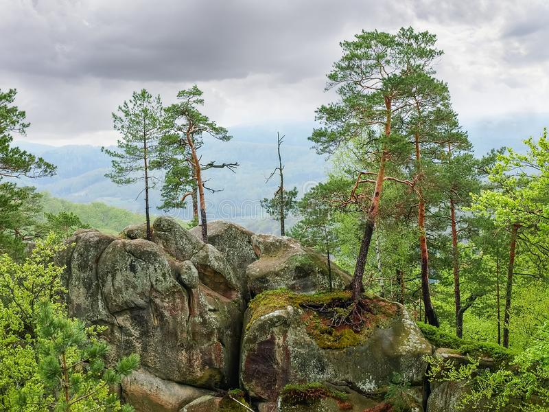 Drzewa r na skałach w krajobrazu parku Dovbush kołysają, Ukraina obrazy stock