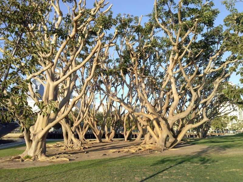 Drzewa schronieniem zdjęcia stock