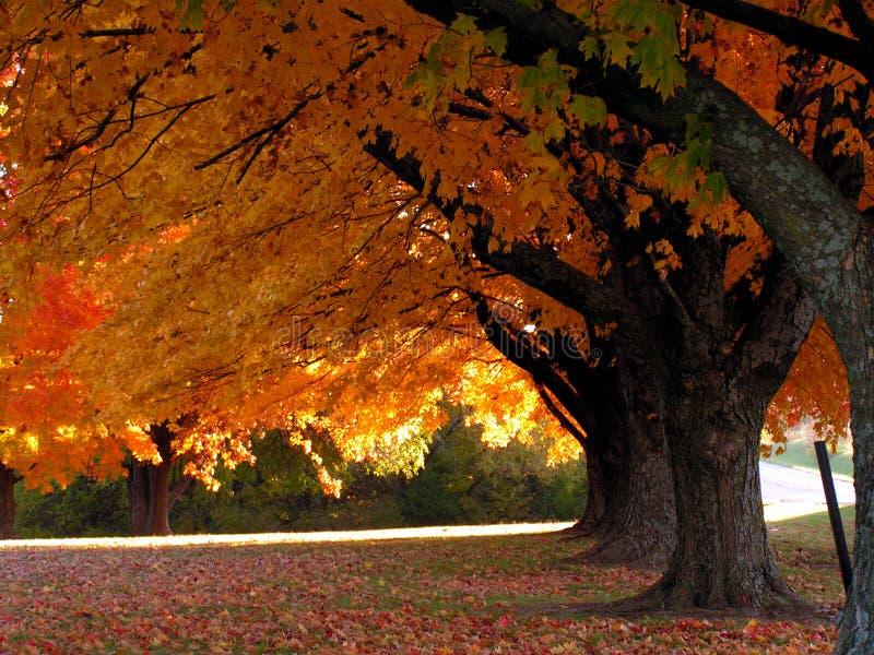 drzewa spadków obraz stock