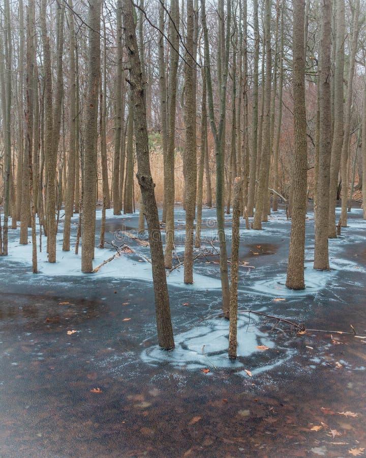 Drzewa Stoi w lukrowej wodzie obraz stock