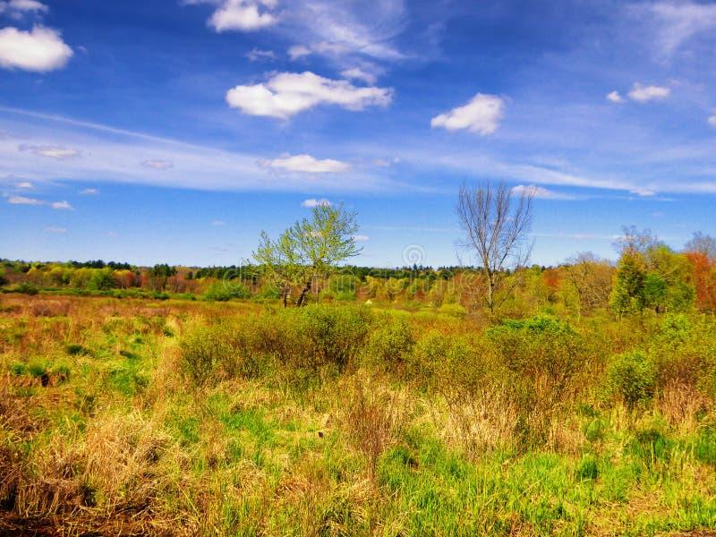 Drzewa wśrodku Białego Pamiątkowego natura terenu obrazy royalty free
