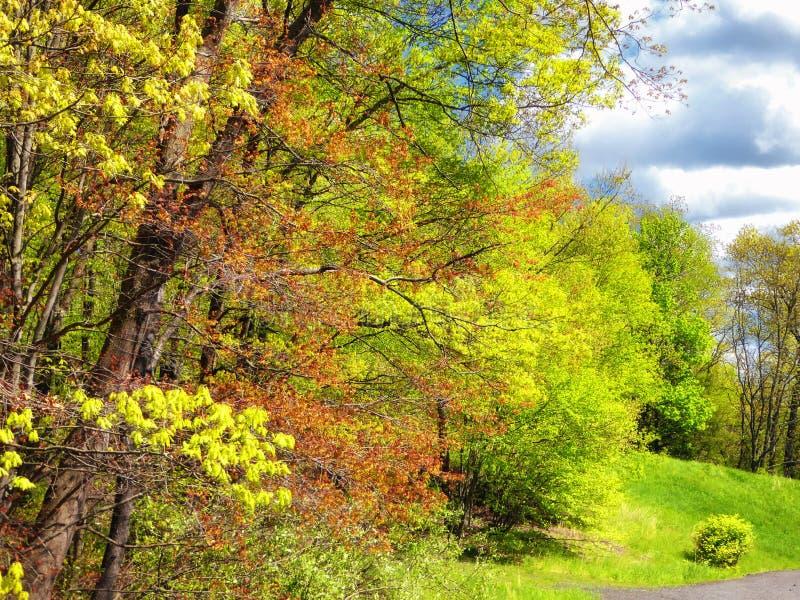 Drzewa wśrodku Białego Pamiątkowego natura terenu zdjęcie royalty free