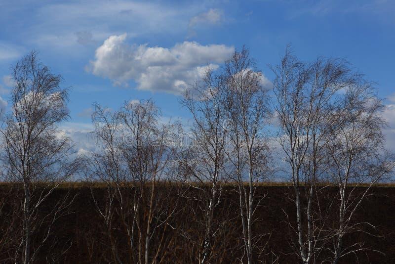 Drzewa w łące przeciw wiosny niebu fotografia royalty free
