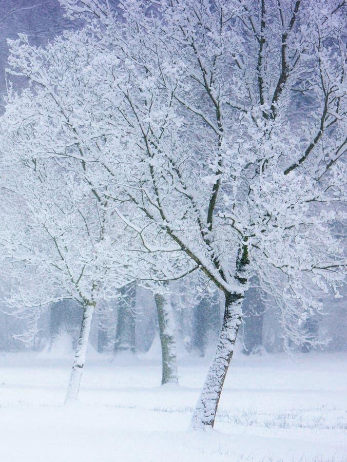Drzewa w śnieżnej burzy zdjęcie royalty free