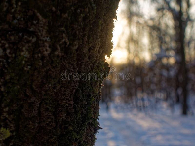 Drzewa w śniegu na jasnym dniu obraz stock