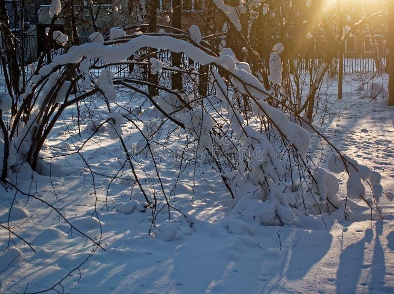 Drzewa w śniegu na jasnym dniu zdjęcie royalty free