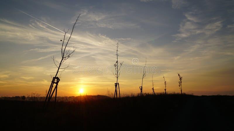 Drzewa w świetle słonecznym zdjęcia royalty free