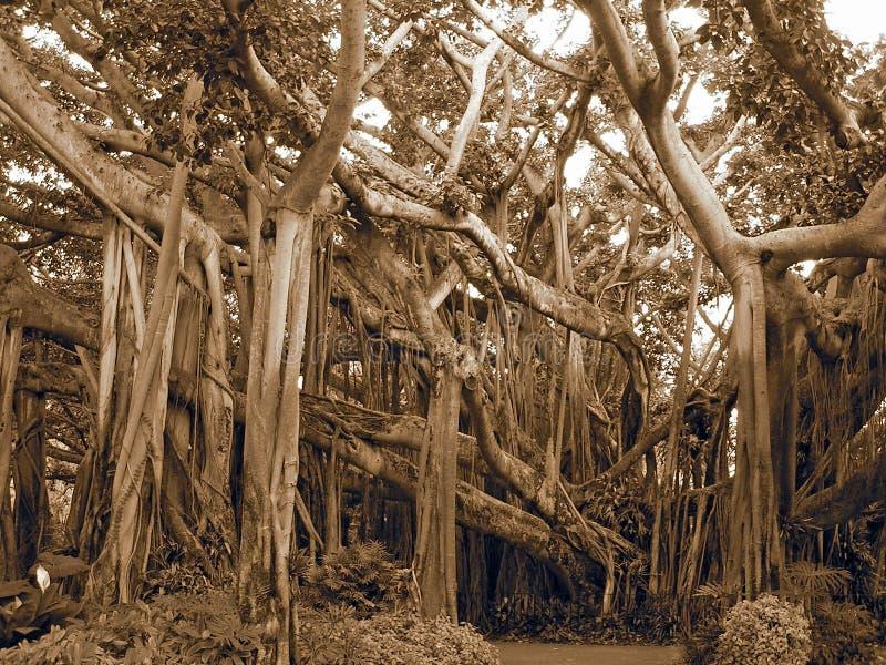 drzewa w góry obrazy stock