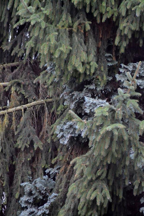 Drzewa w górze fotografia stock