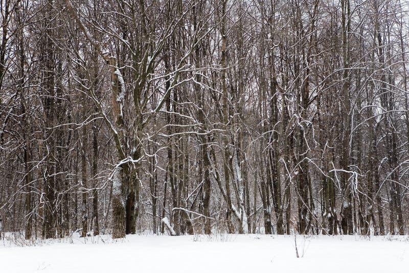 Drzewa w Izmailovo parku w zimie zdjęcia stock