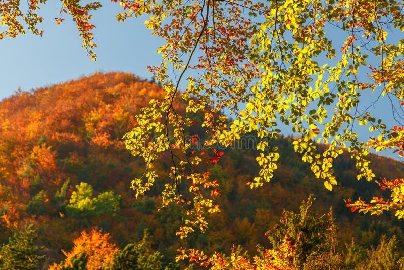 Drzewa w jesień kolorach obrazy royalty free
