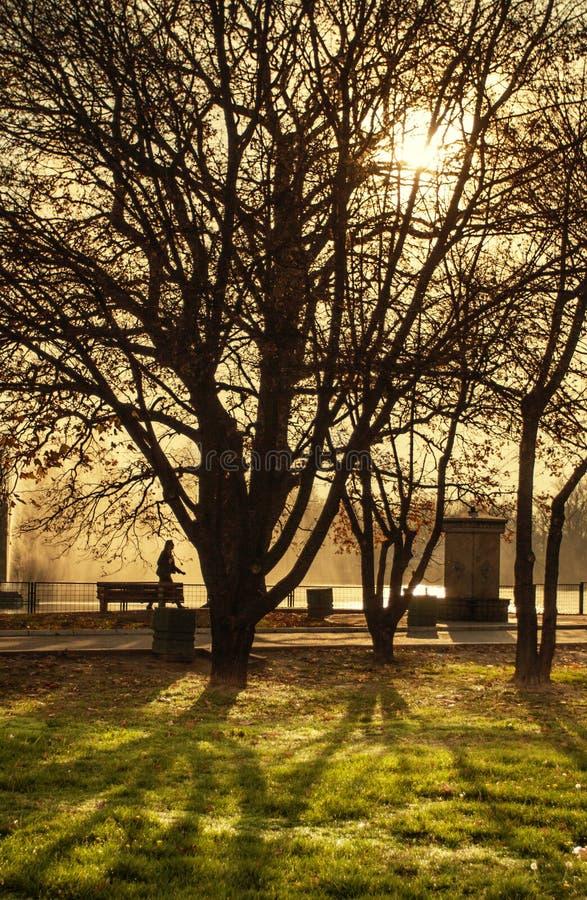 Drzewa w jesień parku