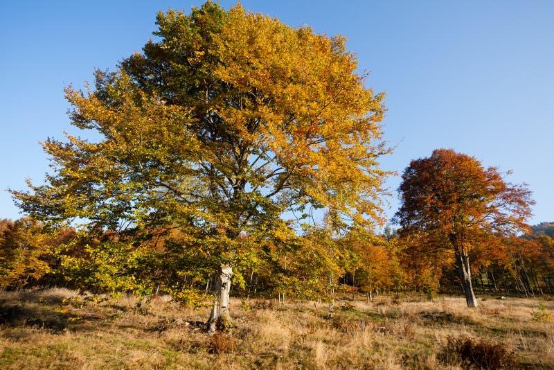 Drzewa w jesie? sezonu tle Jesieni lansdscape obraz royalty free