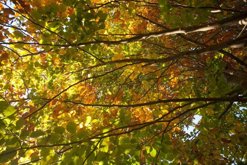 Drzewa w jesie? sezonu tle Jesieni lansdscape fotografia stock