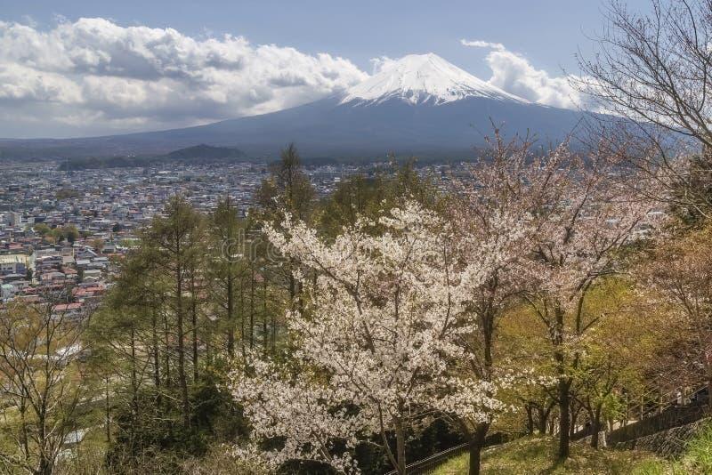 Drzewa w kwiacie z śnieżystą górą Fuji w tle, Yamanashi prefektura, Fujiyoshida, Arakura, Japonia zdjęcie stock