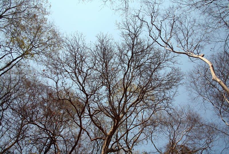 Drzewa w lecie obraz stock