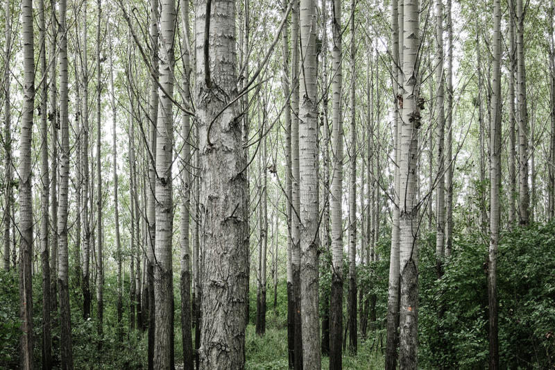Drzewa w lesie fotografia royalty free