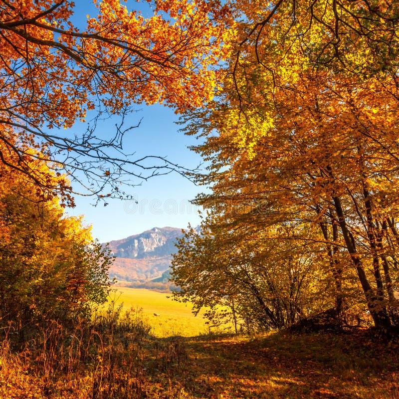 Drzewa w lesie w jesień kolorach obraz stock