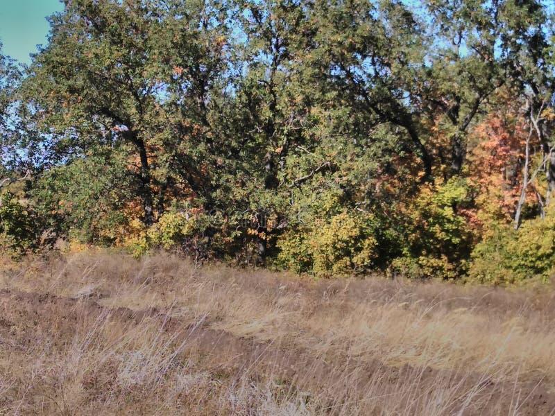 Drzewa w lesie w jesieni zdjęcie stock