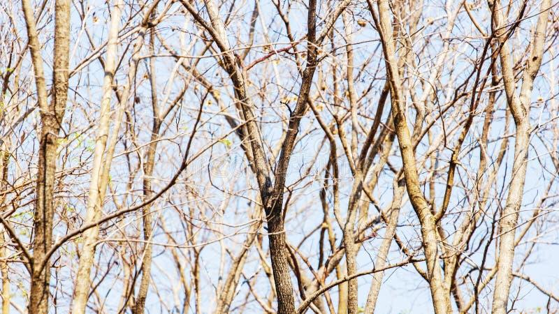 Drzewa w lesie są zbutwiali w lecie obrazy royalty free