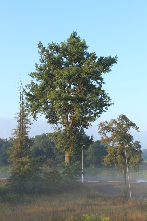 Drzewa w mgle zdjęcia royalty free