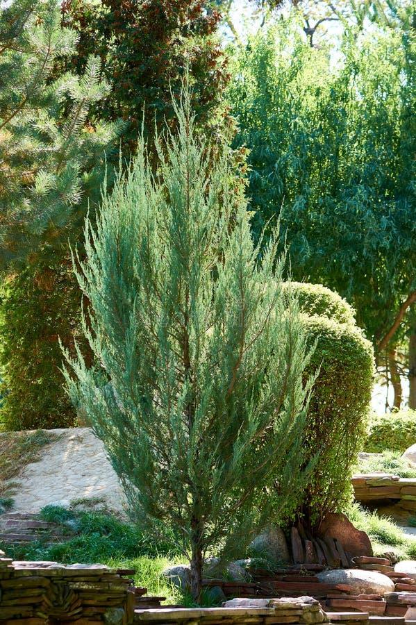 Drzewa w miasto parku, Kazachstan obrazy stock