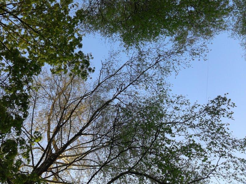 Drzewa w mieście obraz royalty free