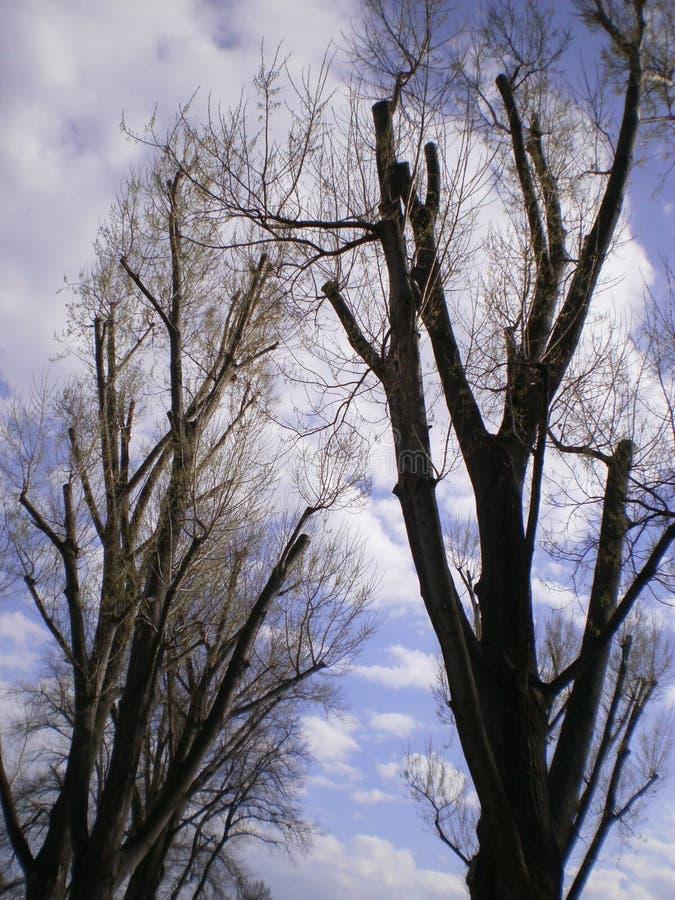 Drzewa w naturze obraz royalty free