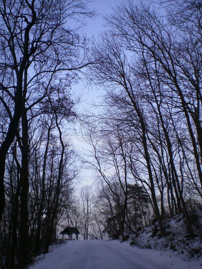 Drzewa w naturze zdjęcie royalty free