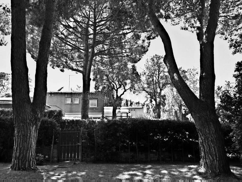 Download Drzewa w ogródzie zdjęcie stock. Obraz złożonej z biały - 57650592