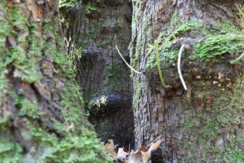 Drzewa w Oregon obrazy royalty free