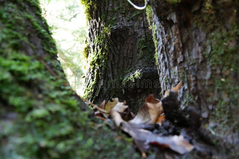 Drzewa w Oregon zdjęcia royalty free