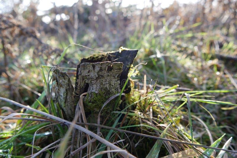 Drzewa w Oregon obraz stock