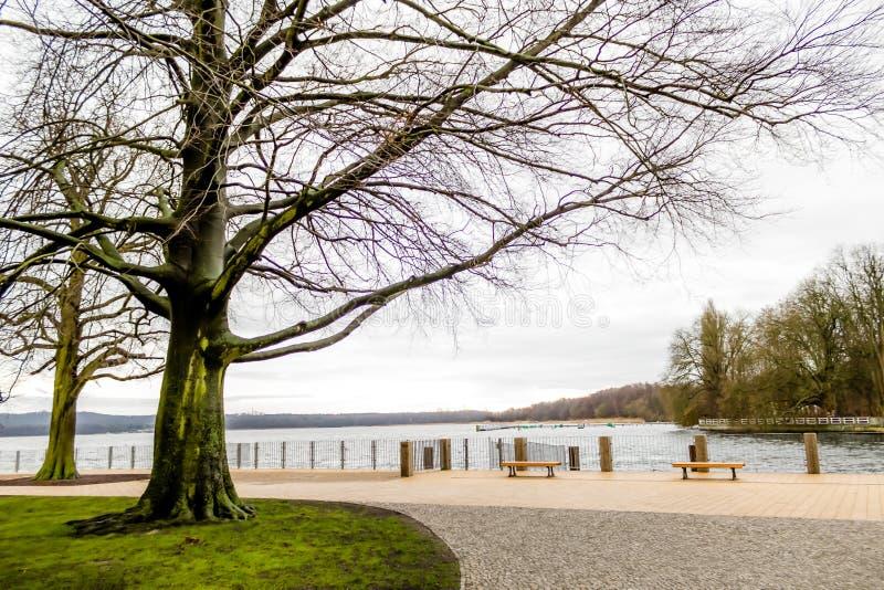 Drzewa w parku przed wodą fotografia royalty free
