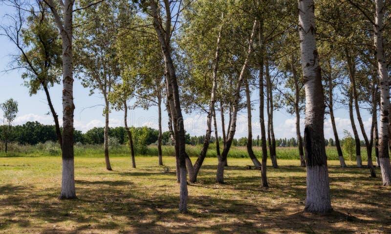 Drzewa w parku obrazy stock