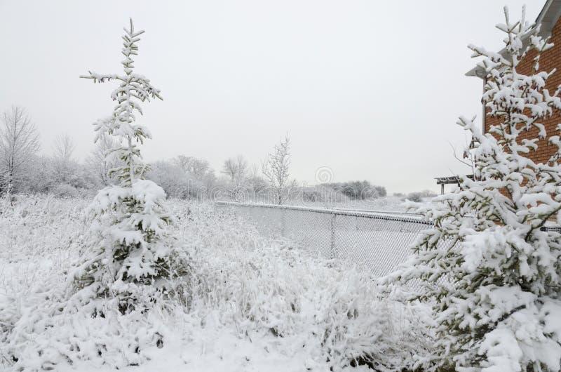 Drzewa w pełni zakrywający śniegiem obraz stock