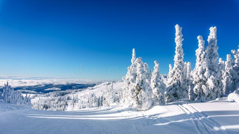 Drzewa w pełni zakrywający w śniegu i iceunder niebieskich niebach obrazy royalty free
