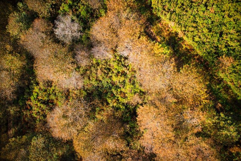 Drzewa w pełnym jesień sezonie obraz stock