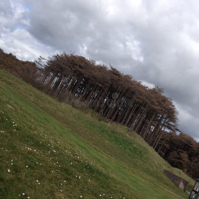 Drzewa w polach obrazy stock