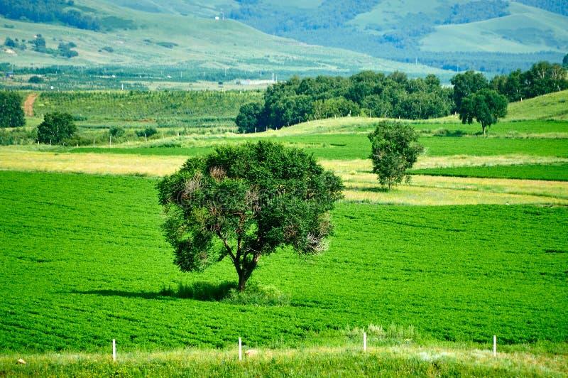 Drzewa w polu zdjęcia royalty free