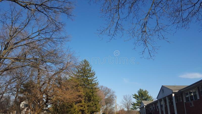 Drzewa w przedmieściach zdjęcie stock
