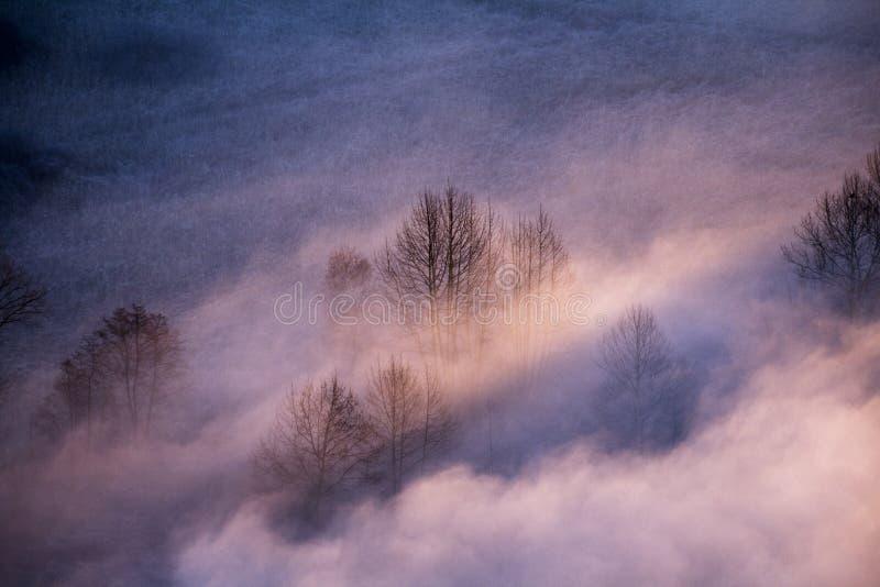 Drzewa w ranek mgle zdjęcie stock